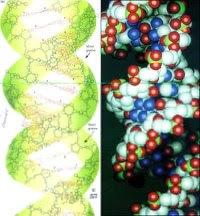 Гены и заикание. Лечение заикания