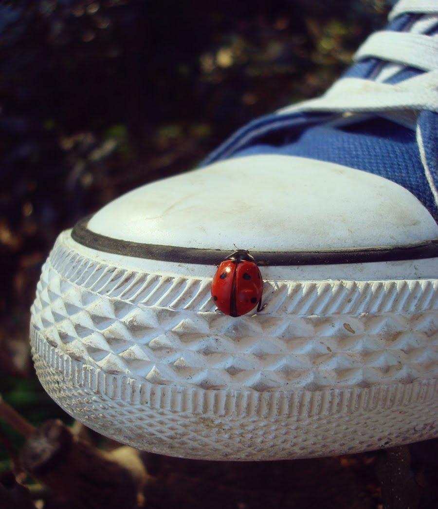 Chutando Bugs