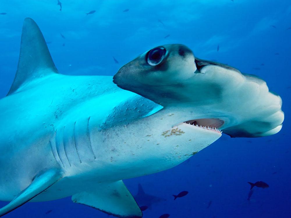 animales marinos imagenes - Los animales marinos más raros y extraños Vista al Mar