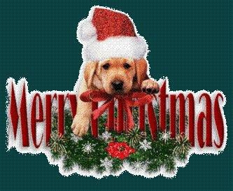 Dog christmas wishes