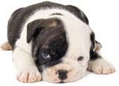 Personality Test for Puppy, puppy personality test