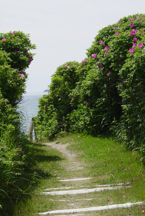 THE PATH TO THE OCEAN, SMELL THOSE ROSES