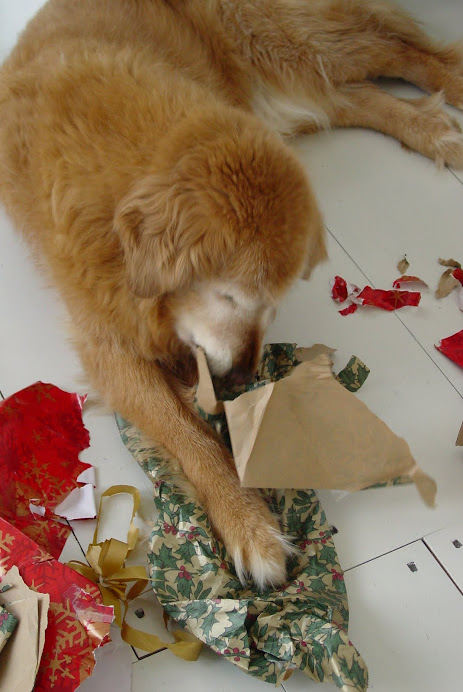 ROOSTER 1995-2010 (HIS CHEWING THE CHRISTMAS WRAPPING PAPER RITUAL)