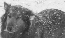 Snowy Cheyenne
