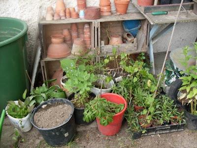 Natürlich Ist Hier Meistens Aufgeräumt Worden, Weil Ja Gäste Zu Besuch  Kommen, Um Den Garten Anzusehen.