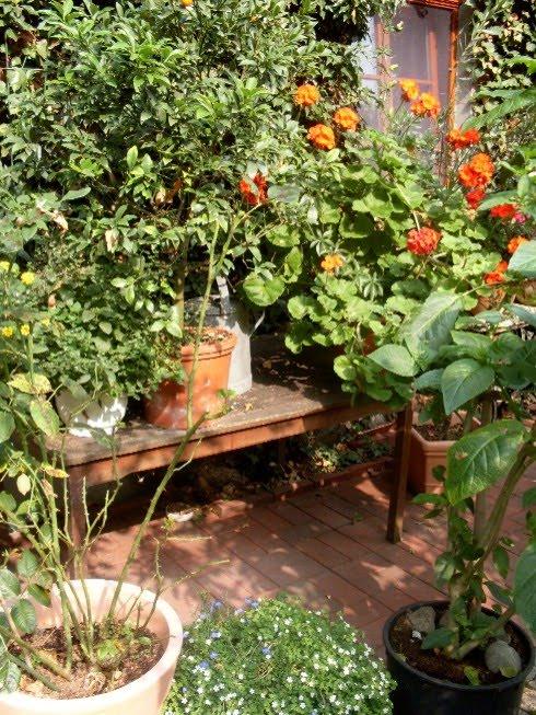 Bevor Man Eine Alten Holztisch Wegwirft, Sollte Man Darüber Nachdenken, Ob  Er Nicht Vielleicht Noch Einige Jahre Im Garten Eine Funktion Erfüllen Kann.