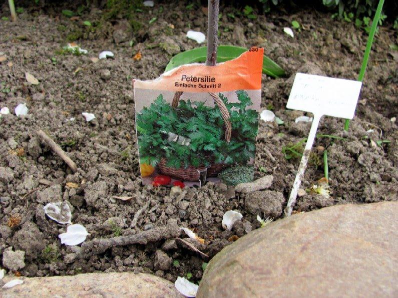 Garten anders: kräutergarten aus kräutersamen und fertigen ...
