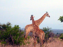 Other Kruger Creatures