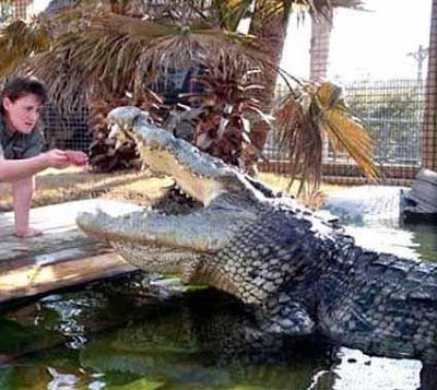 Largest crocodile