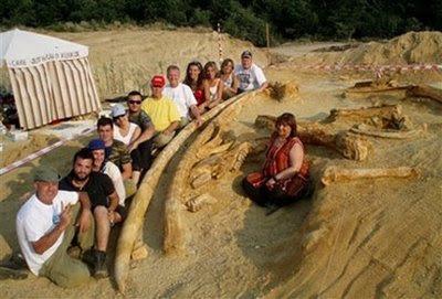 Giant prehistoric tusks