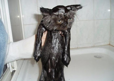 Beautiful Wet Black Pussy