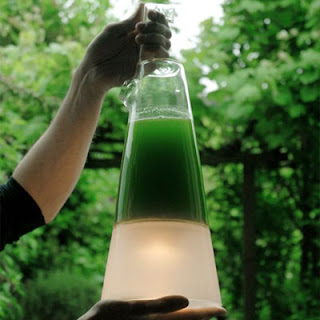 Сосуд с водорослями