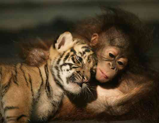 [unlikely-animal-friendships-9.jpg]