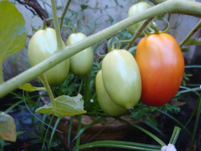 how to grow organic vegetables on terrace