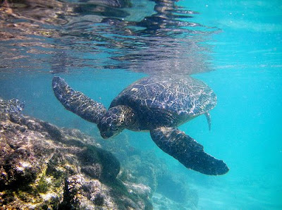 9 The 10 Most Amazing Snorkeling Spots