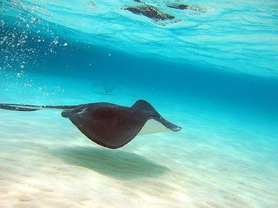 1 The 10 Most Amazing Snorkeling Spots