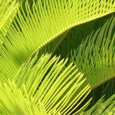 The Rainforest Garden Free Tropical Garden Desktop Wallpapers