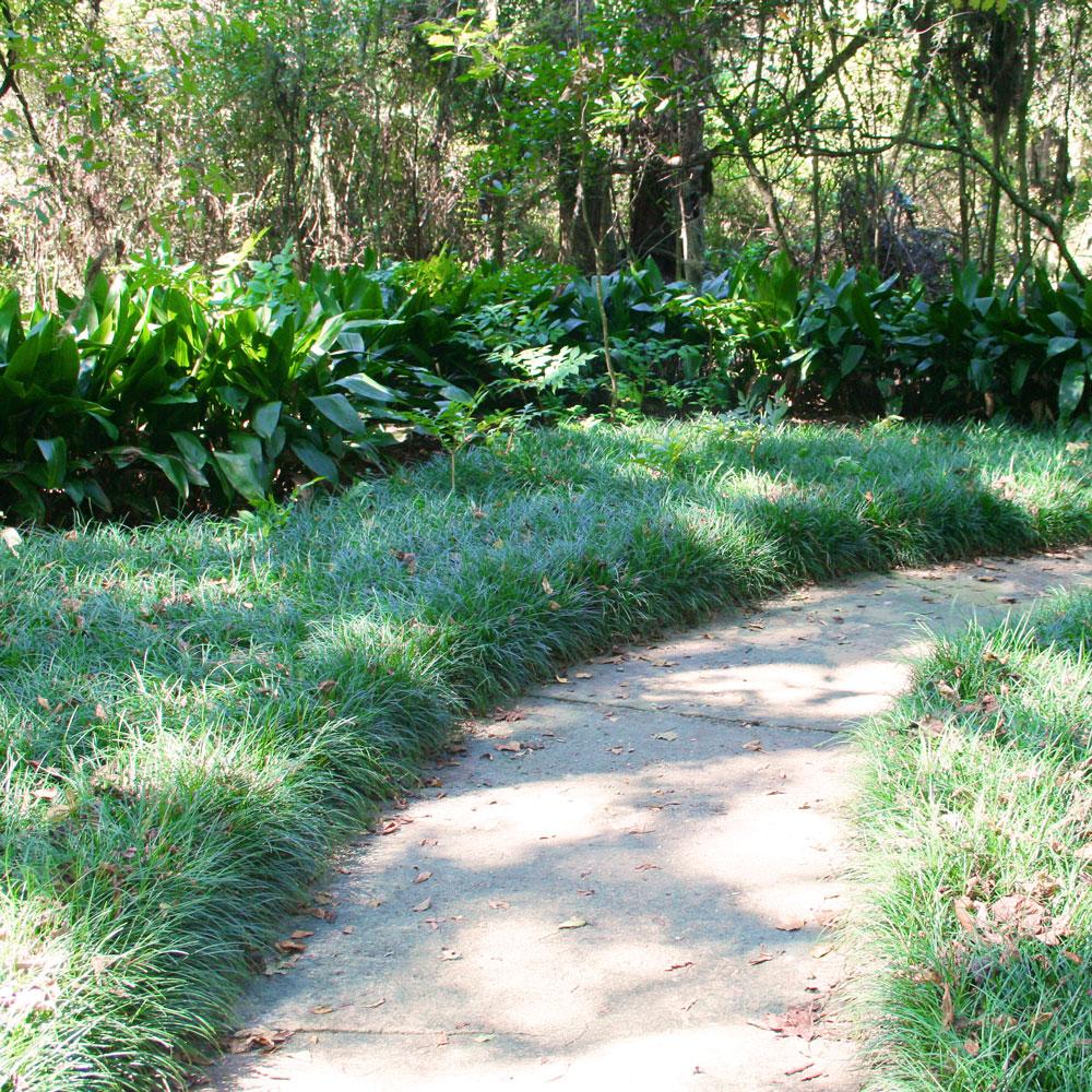 The Rainforest Garden More Inspiration From Kanapaha