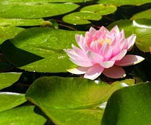 Nin fa mulan feng shui y las flores for Feng shui para la buena suerte