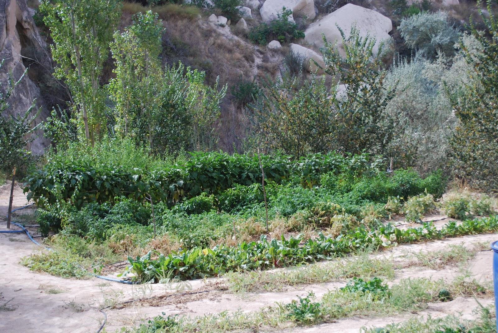 subsistence farming 6 638 jpg cb 1428319941
