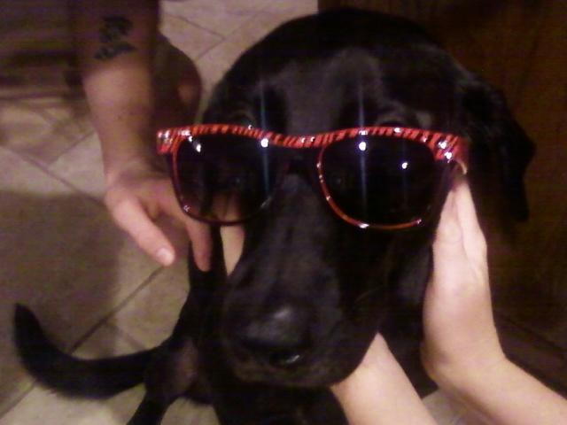 [sunglasses]