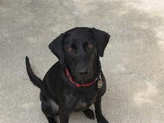 TSA Puppy #1