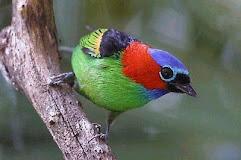 Eventos Ornitológicos