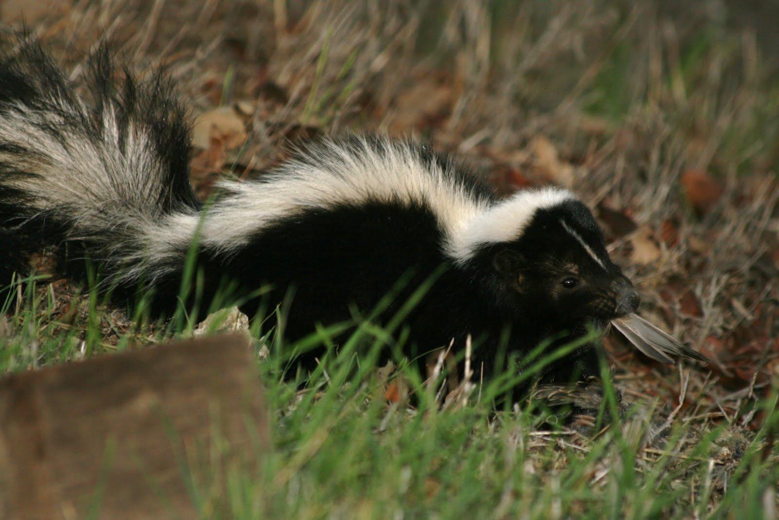 best friends norwalk wild animal wednesday skunks and dogs