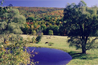 photo of South Newfane, VT