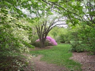 photo of Arnold Arboretum, Jamaica Plain, MA