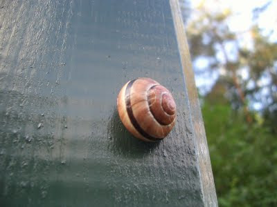 A snail on a lamp post
