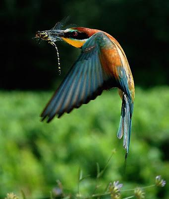 Keindahan Burung Burung dalam Gambar