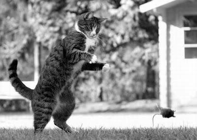 gambar2 cara hewan nangkap hewan lain