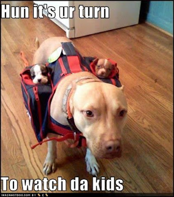 funny-dog-pictures-watch-kids.jpg