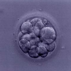 Células Troncales.