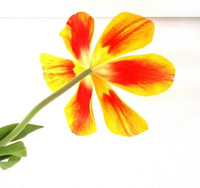 [blomst]
