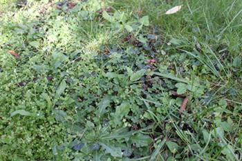Entretien jardin soucis et impatiences projet d automne for Refaire un gazon
