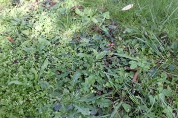 Entretien jardin soucis et impatiences projet d automne for Entretien jardin automne