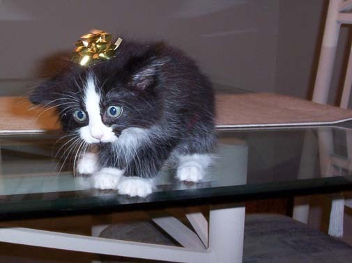christmas wrappingcats updated more cute vids - How To Wrap A Cat For Christmas