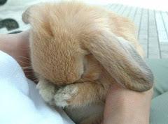 Si no comentas haces llorar al conejito