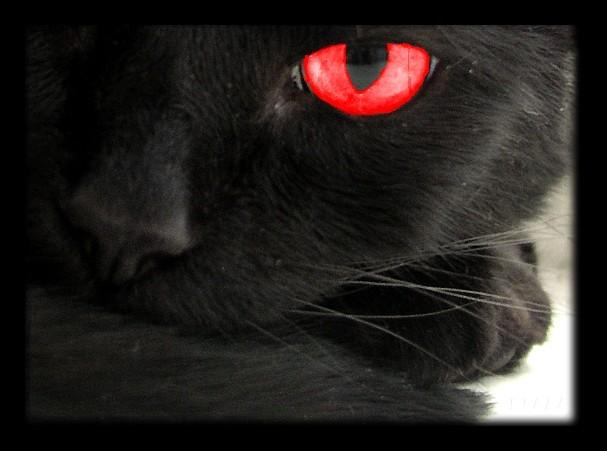 Black Cats Unlucky
