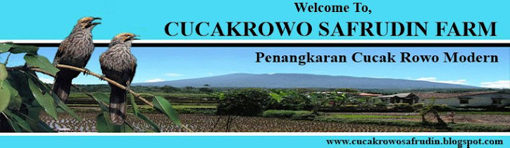 Welcome To Cucak Rowo Breeding