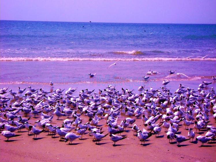 Aves posando