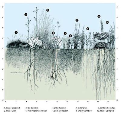 Οι ρίζες στηρίζουν τα φυτά, απορροφούν
