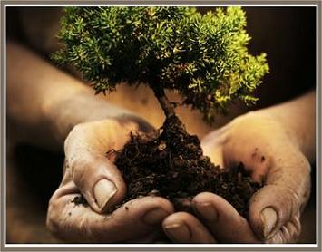 Siembra un Arbol | Planting a Tree