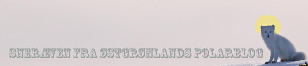 Sneræven fra Østgrønlands polarblog