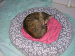 Round beds are so cozy!