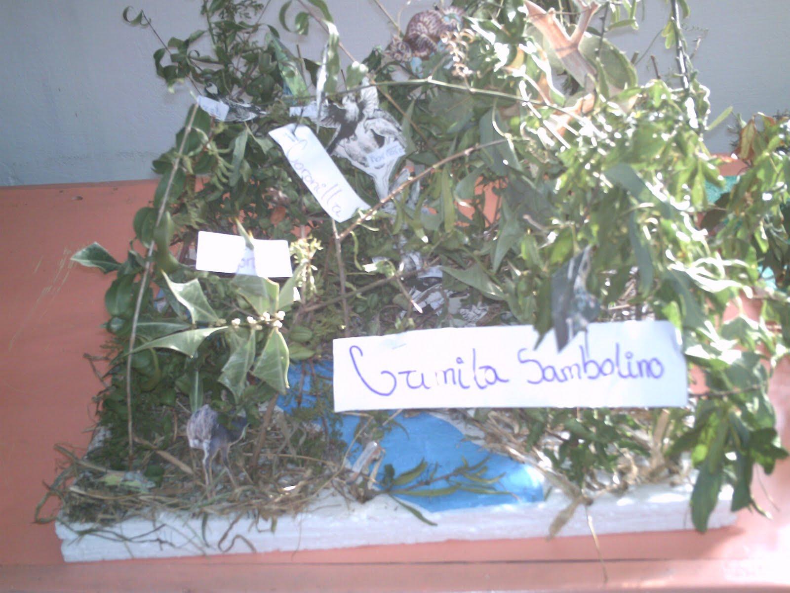 los ecosistemas del uruguay ver publicación sobre biomas del uruguay