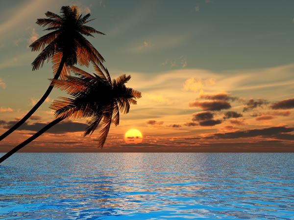 Palm tree sunrise for Beach sunset mural