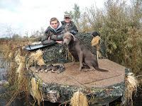 hunting lab